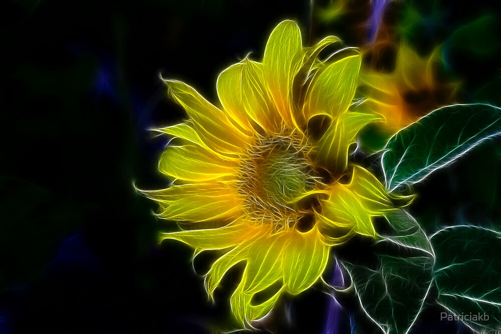 Sunflowers by Patriciakb