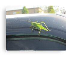 Free ride for Jimminey Cricket Canvas Print