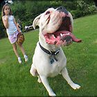 Hugo the dog by Jackie Barefield