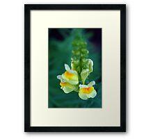 Floating Flowers Framed Print