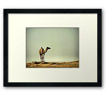 The Ship of the Desert Framed Print