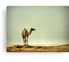 The Ship of the Desert Canvas Print