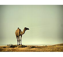 The Ship of the Desert Photographic Print