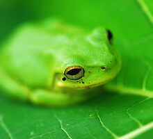 Baby Frog on a Pawpaw Leaf by Janette Rodgers