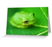 Baby Frog on a Pawpaw Leaf Greeting Card
