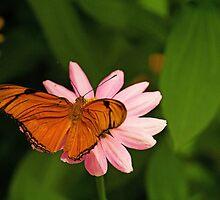 Butterfly by Thad Zajdowicz