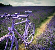 Lavender Bike by Kerto Koppel-Catlin