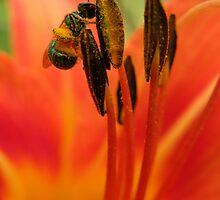 Pollenated by Nokie