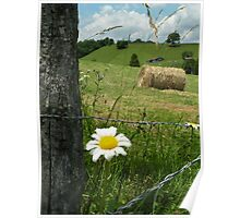 Fence A Daisy Poster