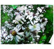 Wild Mountain Asters...  Poster