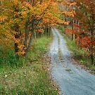 Into The Woods Of Fall by Deborah  Benoit