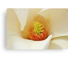 Center Of Magnolia Flower Canvas Print