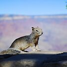 Rock Squirrel at the Grand Canyon by Catherine Sherman