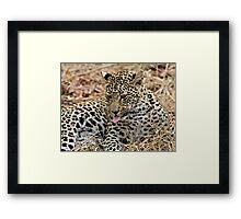 Leopard Cub Expressing Herself Framed Print