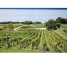 Lakeside Vines Photographic Print