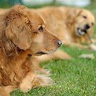 Annie & Daisy by okcandids
