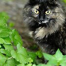 Sophie in the weeds. by okcandids