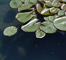 Lily Pad Magic by Hayley Solich