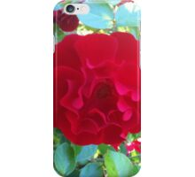 Red Roses with Sunlight iPhone Case/Skin