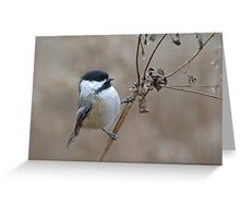 Cute Wild Black Capped Chickadee Bird on Dried Dead Queen Anne's Lace Plant Stem Greeting Card