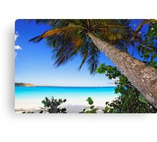 Leaning Palm Tree on a Tropical Beach Canvas Print