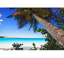Leaning Palm Tree on a Tropical Beach Photographic Print