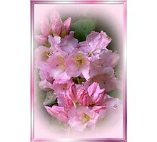 PINK CANDY Photographic Print