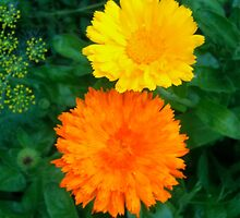 Yellow & Orange Sunshine Floral by Megan Nicole