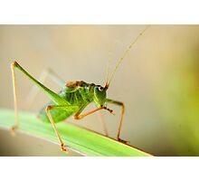 Green hoppy! Photographic Print