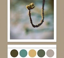 Spring colors... by polaroids