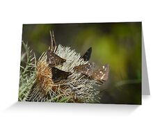 Southern Cloudywing Greeting Card
