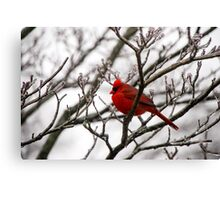 Winter Cardinal - Icy Tree Canvas Print