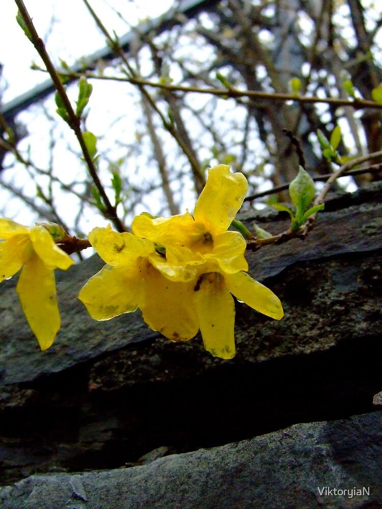 Spring is here! by ViktoryiaN
