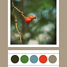 Rose hip colors... by polaroids