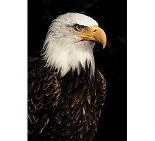 Bald eagle portrait Photographic Print