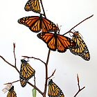 Monarch Butterfly Tree by Molly  Kinsey