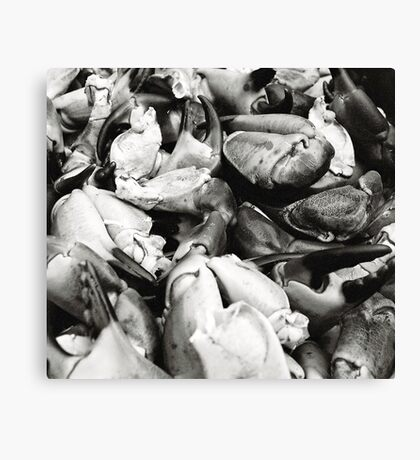 Crab Claws Canvas Print
