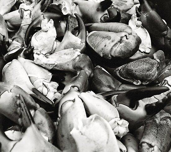 Crab Claws by rorycobbe