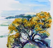 Yellow Gorse by Richard Sunderland