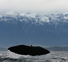 Sperm Whale by amjaywed