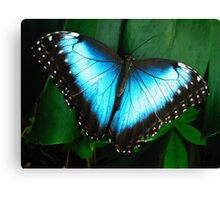 Azure Wings Canvas Print