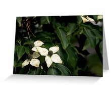 Kouza Dogwood from A Gardener's Notebook Greeting Card