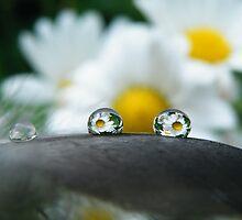 Daisy's daisy's everywhere by Yool