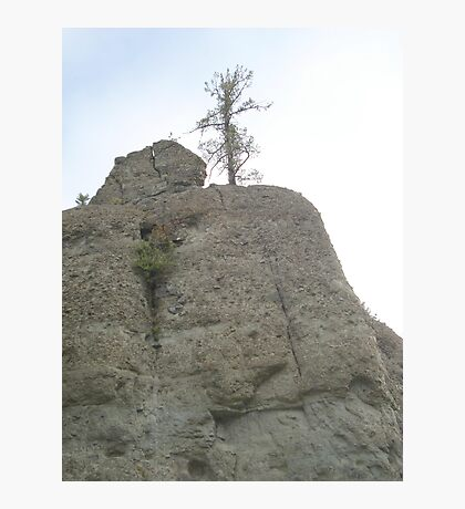 Tree on Sandstone Outcrop Photographic Print