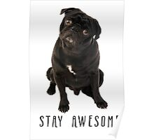 Funny Black Pug Stay Awesome  Poster