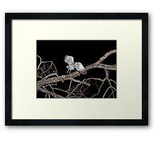 Barn Owl In Flight Framed Print