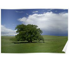 Eastern Plains Sentinel after passing storm Poster