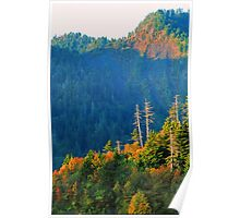 NEWFOUND GAP,AUTUMN Poster