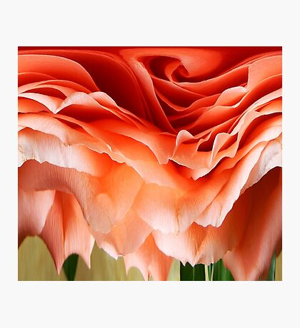 DISTORTED ROSE Photographic Print