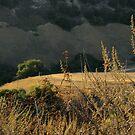 Monterey Hills 1 by Ellen Cotton